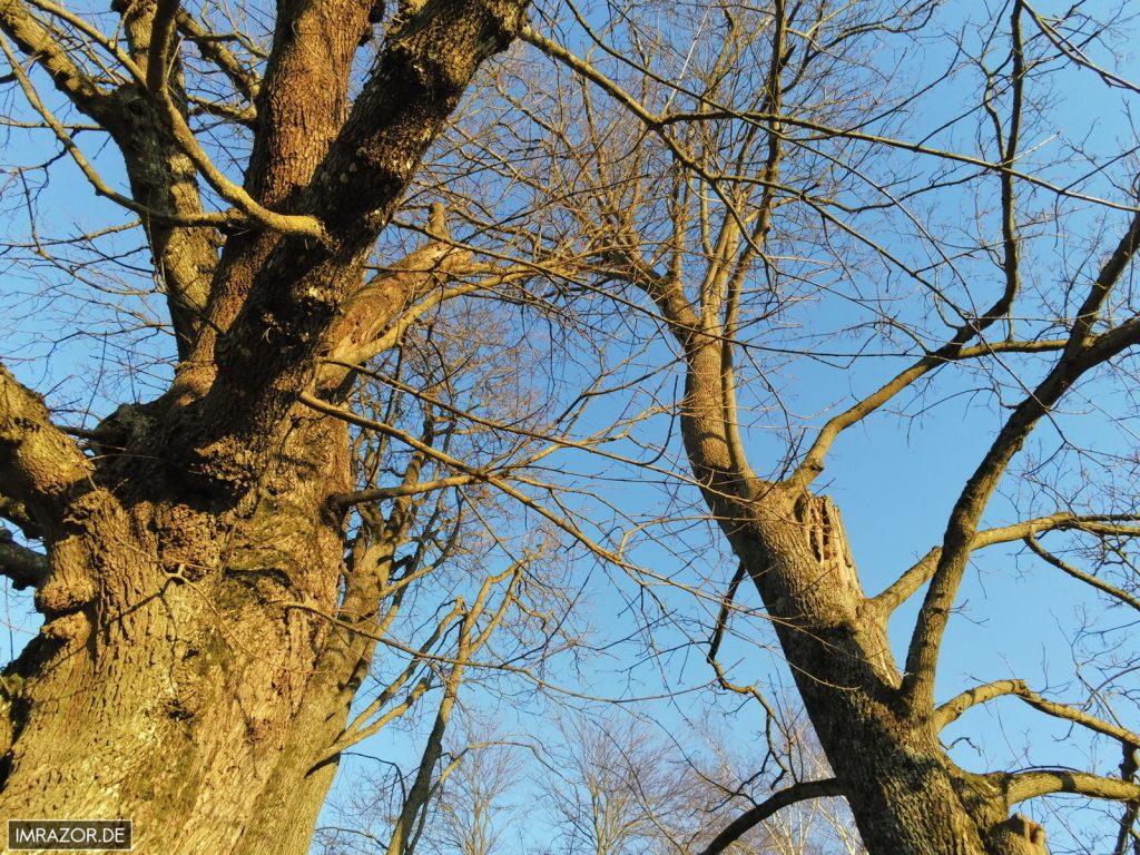 90° Aufnahme nach oben unter Bäumen (unbearbeitet)